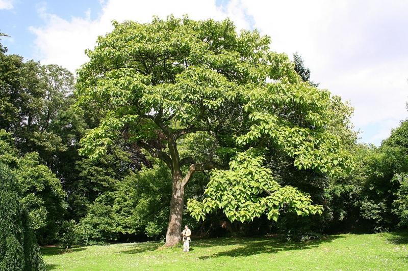 614f0b5abde2 Геннисийн номонд бичигдсэн 7 мод   Ногоон хөгжил